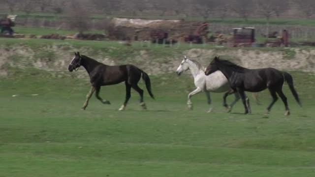 en el sur de moldavia la minoria turca adora a los caballos pero su tradicion peligra por los recortes y las privatizaciones - afp stock videos & royalty-free footage