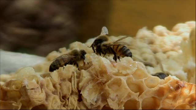 stockvideo's en b-roll-footage met en los montes de la provincia de matanzas en el oeste de cuba las abejas zumban lejos del peligro que las acecha en otras partes del mundo tienen una... - agricultura