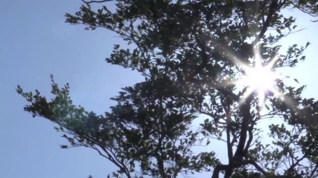 en un planeta amenazado por el calentamiento renace un gigante con poderes naturales que podria ayudar desde colombia - planeta stock videos & royalty-free footage