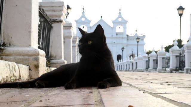 En un pueblo de Colombia una familia es acusada de tener un pacto con el diablo porque varios gatos cuidan las tumbas de sus seres queridos en el...