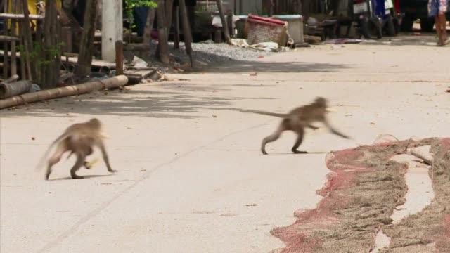 stockvideo's en b-roll-footage met en un pueblo de la costa este de tailandia los saqueos son cotidianos y pese a las estrategias de defensa aplicadas los habitantes siguen a la merced... - steel