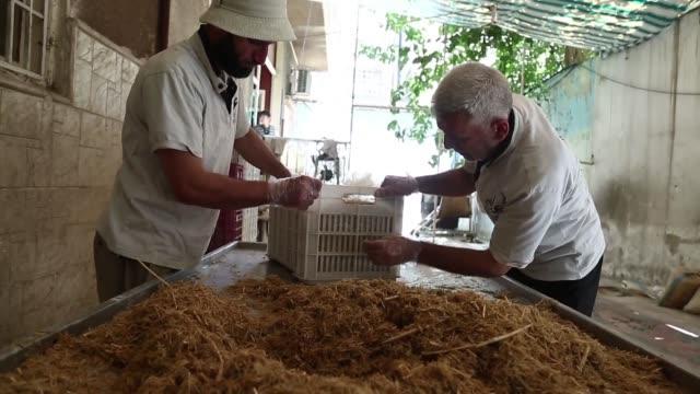 stockvideo's en b-roll-footage met en una humeda habitacion en la asediada ciudad siria de duma un grupo de emprendedores inspecciona champinones que brotan de sacos colgados del techo - agricultura