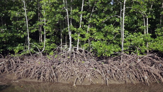 endangered species mangrove forest ecosystem with plastic pollution - ko lanta stock videos & royalty-free footage