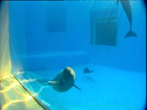 endangered yangtze porpoises swimming in aquarium behind glass china - 優美点の映像素材/bロール