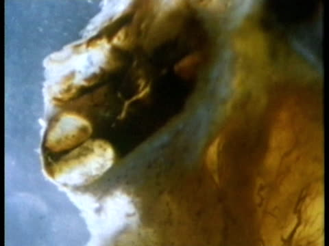 1969 endoscopic view of a cross section through the exterior of the cochlea of the human ear, revealing two parallel tubes/ usa/ audio - human ear stock videos & royalty-free footage