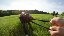 POV: Energetic puppy tugs on destroyed frisbee in a sunny meadow near forest.
