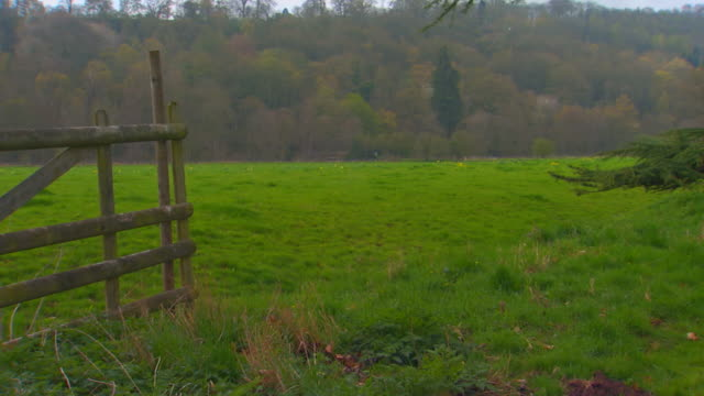 englandgate to tree pan - zaun stock-videos und b-roll-filmmaterial