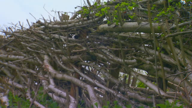 englandtree twig fence - twig stock videos & royalty-free footage