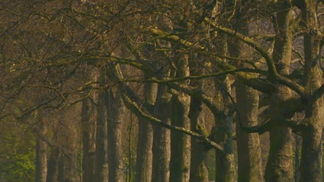 englandvictoria tower gardens - unknown gender stock videos and b-roll footage
