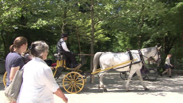 stockvideo's en b-roll-footage met englischer garten, people in carriage, horses, trees, sunny - werkdier