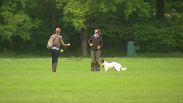 englischer garten, woman playing with her dog, lawn, trees - ball stock videos and b-roll footage