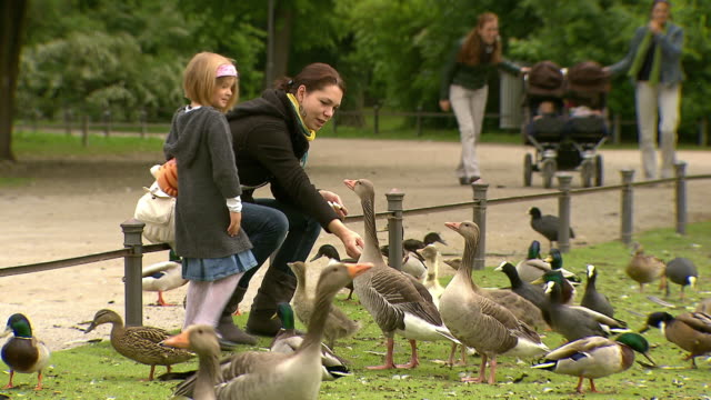 englischer garten, woman with her daughter feed ducks, lawn, trees - pushchair stock videos & royalty-free footage