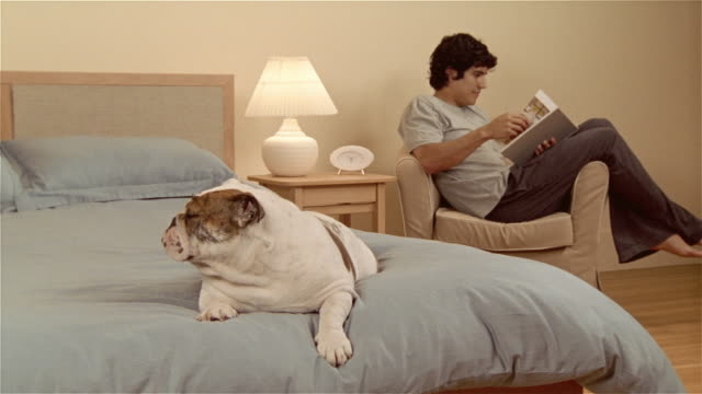 MS, CU, English bulldog lying on bed, man sitting in armchair, reading book