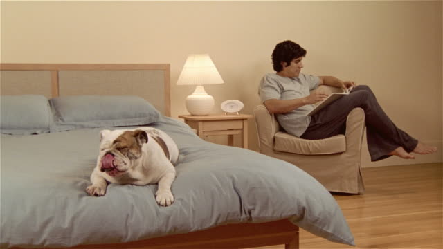 MS, English bulldog lying on bed, man sitting in armchair, reading book