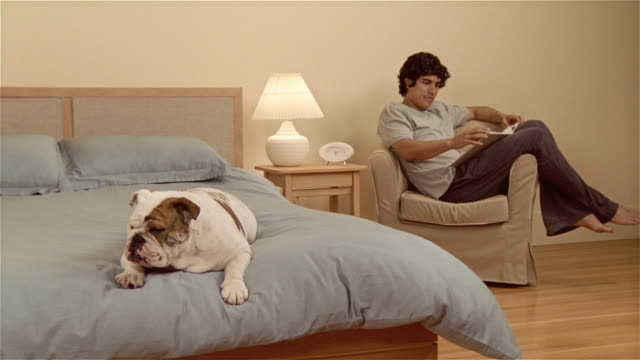 stockvideo's en b-roll-footage met ms, cu, english bulldog lying on bed, man sitting in armchair, reading book - alleen één mid volwassen man