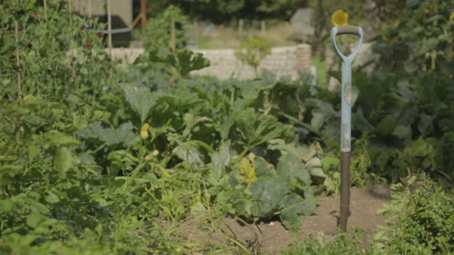 english country garden - vegetable garden stock videos and b-roll footage