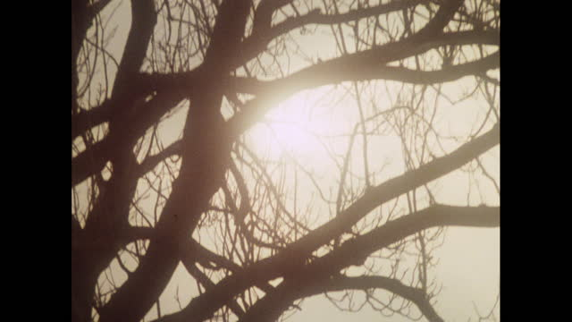 english countryside in winter, 1970s - bare tree stock videos & royalty-free footage