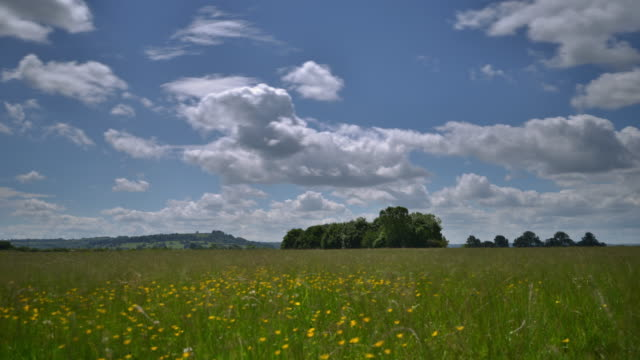 stockvideo's en b-roll-footage met english countryside on a summers day - ranonkel
