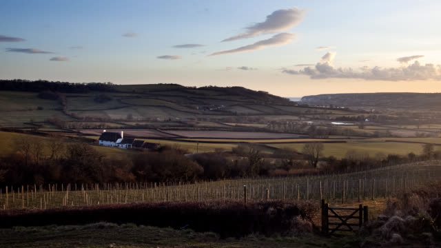 english vineyard hills and sea timelapse ms - devon stock videos & royalty-free footage