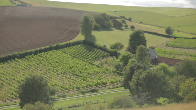 english vineyard - sussex stock videos and b-roll footage