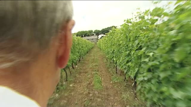 english wine producers expect bumper crop this year; england: cornwall: bodmin: ext various shots camel valley vineyard close up shot grapes on vine... - produzent stock-videos und b-roll-filmmaterial