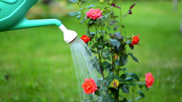 enjoying in the garden - watering can stock videos & royalty-free footage