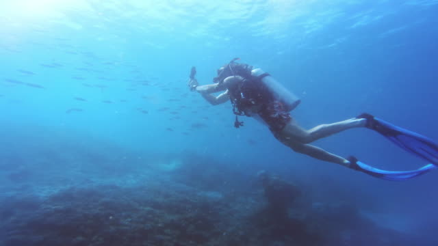 enjoying life one dive at a time - circular strobe stock videos and b-roll footage