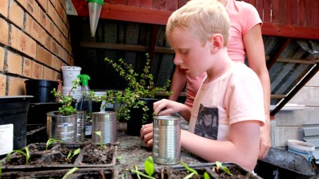 vídeos de stock e filmes b-roll de enjoying planting out some water wise plants - colocar planta em vaso