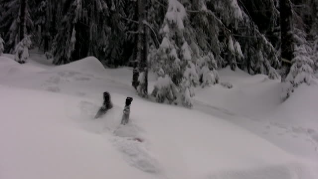 enjoying the snow - thick stock videos and b-roll footage