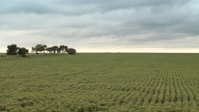 ms pan enormous soy field / monte cristo, cordoba, argentina - soya bean stock videos & royalty-free footage