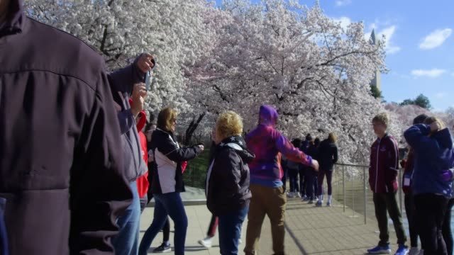 <> on april 1 2019 in washington dc - natural parkland stock videos and b-roll footage