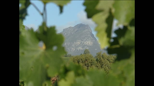 <> on february 03 2004 in stellenbosch south africa - stellenbosch stock videos and b-roll footage