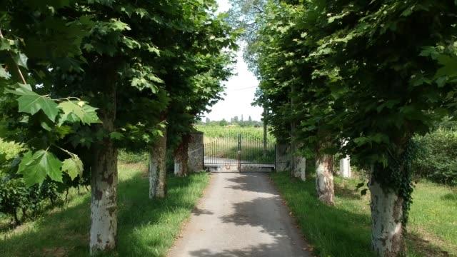 enter tree lined driveway in vineyard in yvrac, bordeaux, france - grape leaf stock videos & royalty-free footage