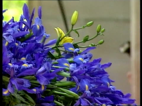 michael hutchence funeral coffin of hutchence with a few tiger lily flowers seen amongst mass of blue irises carried into cathedral - tiger lily stock videos & royalty-free footage