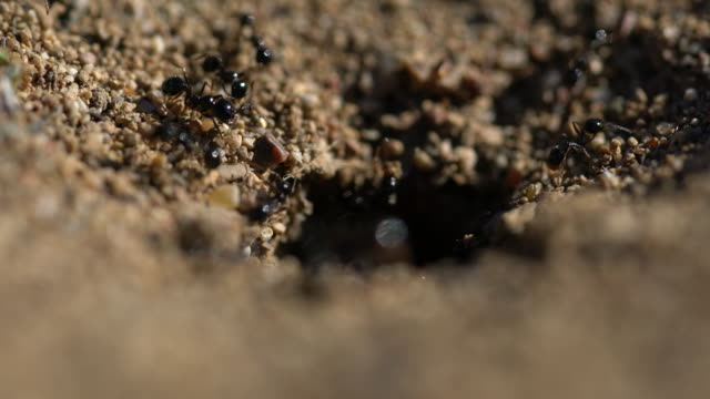 entrance of the anthill macro photo ant - ant stock videos & royalty-free footage