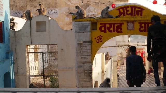 Entrance to a temple ghat leading towards the lake shore being guarded by monkeys in Pushkar, india