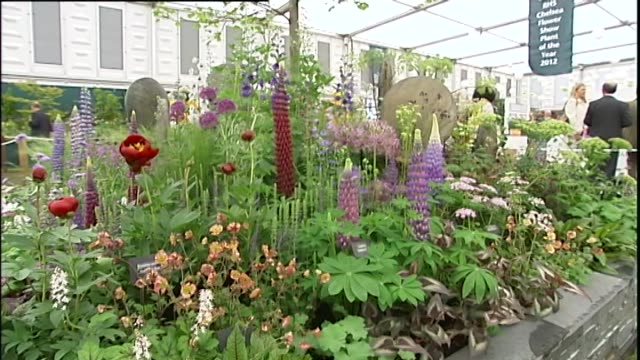 entrance to marquee at the chelsea flower show / flower bed display / lily pads and reeds in pond / red and purple lupinus 'beefeater' flowers / man... - chelsea flower show stock videos & royalty-free footage