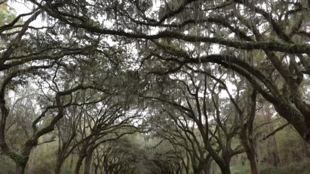 stockvideo's en b-roll-footage met entrance to wormsloe state park in savannah georgia - georgia us state