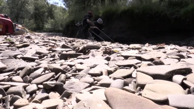 environment agency staff rescue fish from the river teme in brampton bryon, herefordshire, as the uk heatwave continues. the trout and baby salmon... - herefordshire stock videos & royalty-free footage