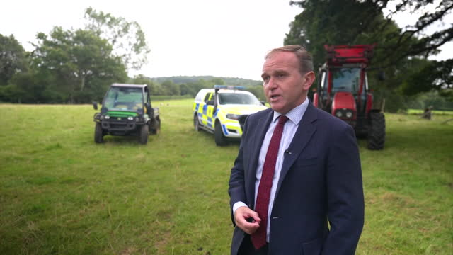 environment secretary george eustice saying the government are strengthening the law against pet theft - pets stock videos & royalty-free footage