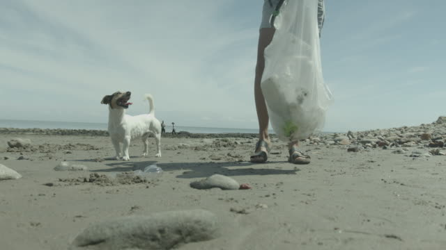 environmental activist couple cleaning the beach from plastic and rubbish with dog walking - 犬の散歩点の映像素材/bロール