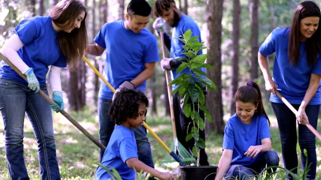vídeos de stock e filmes b-roll de environmental beautification. volunteers plant flowers, tree, plants at park in spring. - arvore