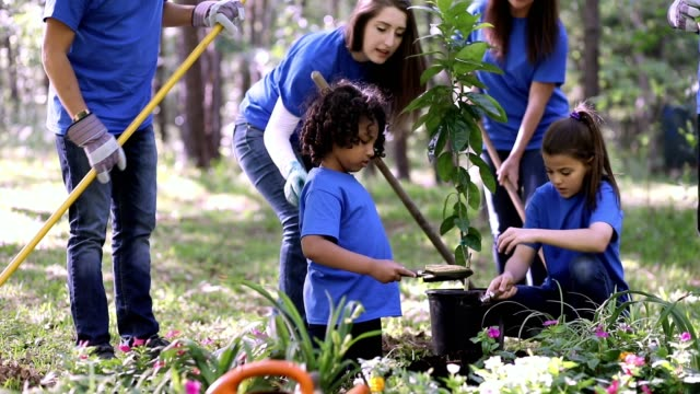 environmental beautification. volunteers plant flowers, tree, plants at park in spring. - planting stock videos & royalty-free footage