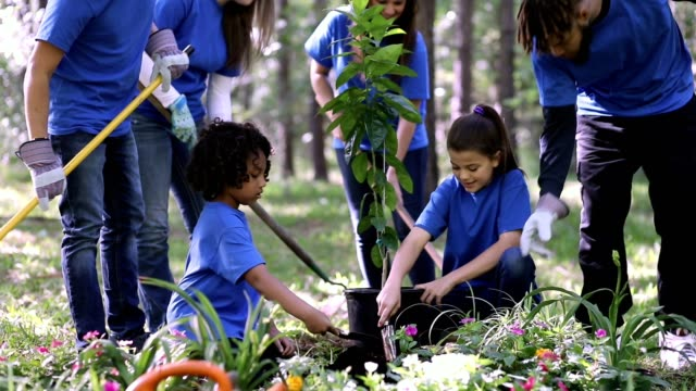 environmental beautification. volunteers plant flowers, tree, plants at park in spring. - planting stock videos & royalty-free footage