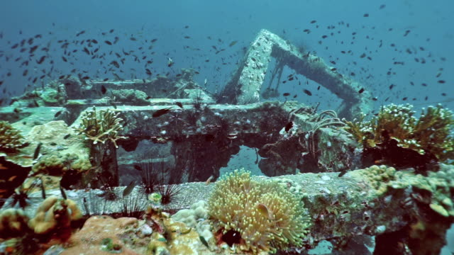 environmental conservation underwater coral nursery on artificial reef - ocean acidification stock videos and b-roll footage