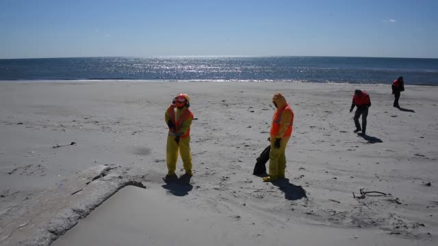 environmental crew members conduct a shore clean-up of tar balls april 1 at rockaway beach in new york. - oregonkusten bildbanksvideor och videomaterial från bakom kulisserna