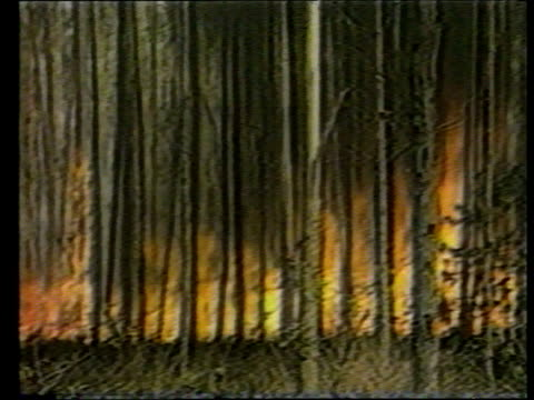 WWF campaign TX 21289 ITN BRAZIL Amazonia AIRV Mountains as smoke rises from rain forest TRACK RL GV Trees on fire PULL TGV Burnt trees PAN LR...