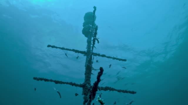 vídeos de stock, filmes e b-roll de inovação ambiental projeto de conservação subaquática recife de coral artificial - coral cnidário
