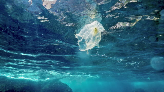 environmental issues single use plastic in the ocean - sea life stock videos & royalty-free footage