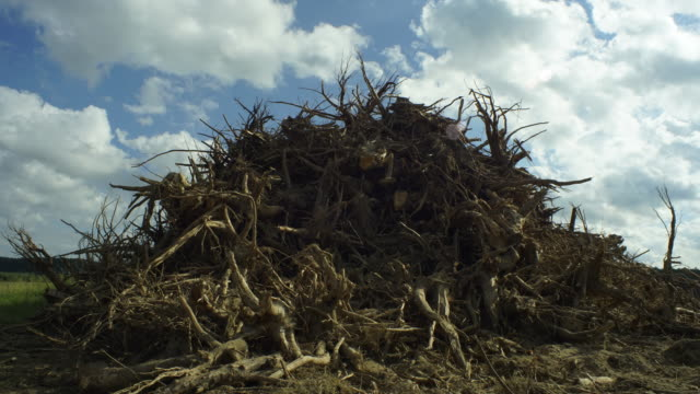 environmental protection - torn roots - imperfection stock videos and b-roll footage
